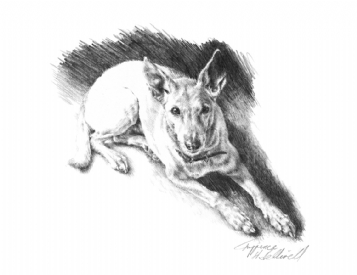 Harriet King Artist Photo Realistic Animal Art Prints