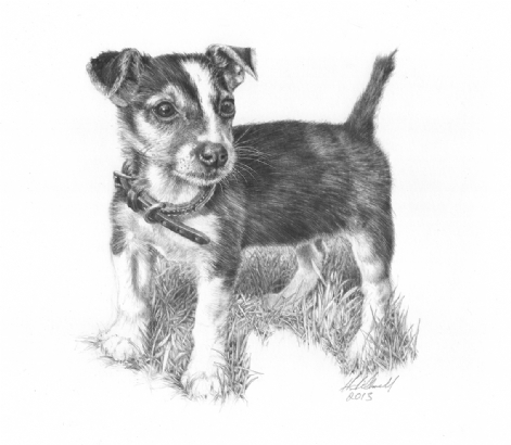 'Just Gorgeous' Jack Russell Pup